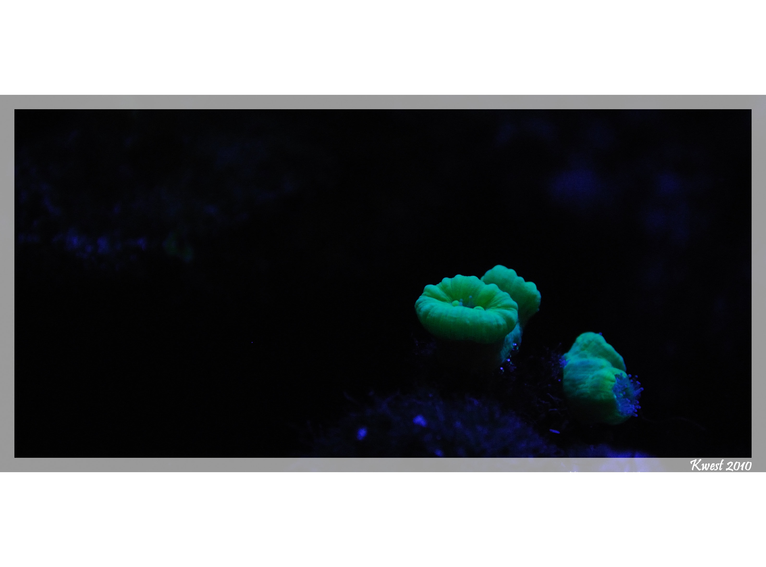 Entretien d aquariums mond 39 aquatic for Entretien aquarium